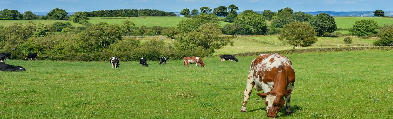 livestock-601277_1309