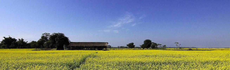 mustard-255825_1309